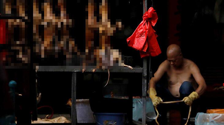 Çin'de o şehirde kedi-köpek eti yemek yasaklandı!