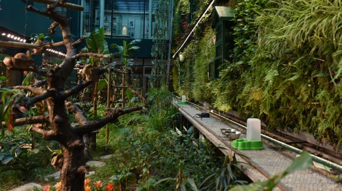 Dünyanın içinde yağmur ormanı bulunan tek oteli Türkiye\'de