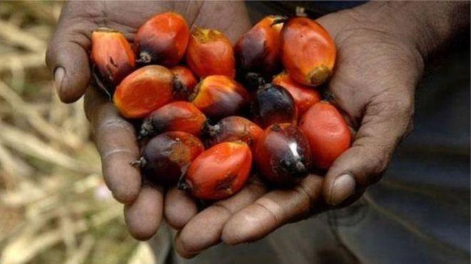 Gıda ürünlerinde kullanılan palmiye yağı neden risk oluşturuyor?