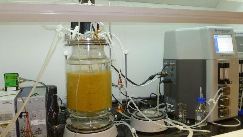 Bilim İnsanları, Gıda Atıklarını Hidrojene Çeviren Yeni Bir Yöntem Keşfetti