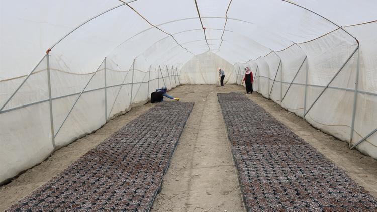 Yozgat\'ta 6 çeşit yerli patates tohumu ekildi