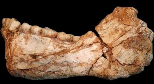 Homo Sapiens'in ne yediği ortaya çıktı