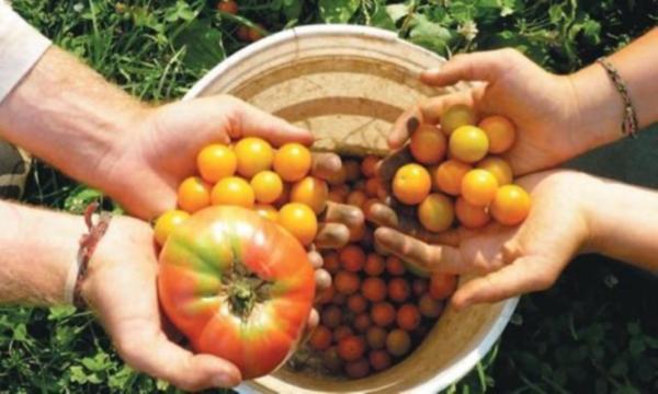 Türkiye'de en çok tüketilen organik gıda hangisi?