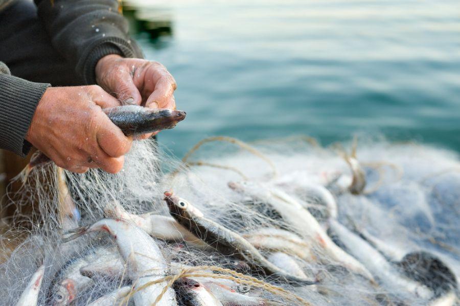 Ocak ayında hangi balıklar yenmeli?