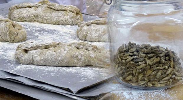 Böcekli ekmek satacaklar