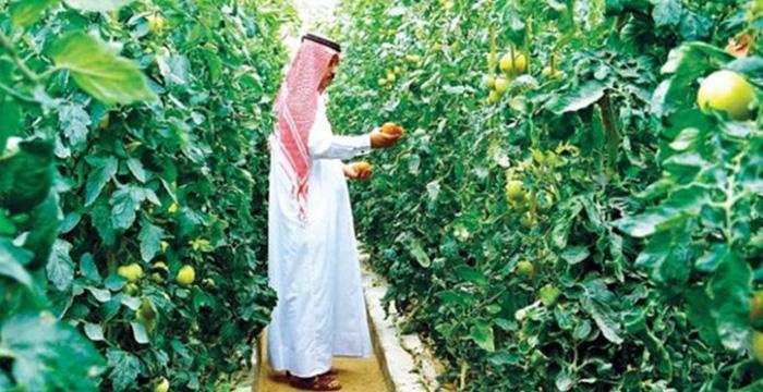 Türkiye ile Katar arasında tarım iş birliği