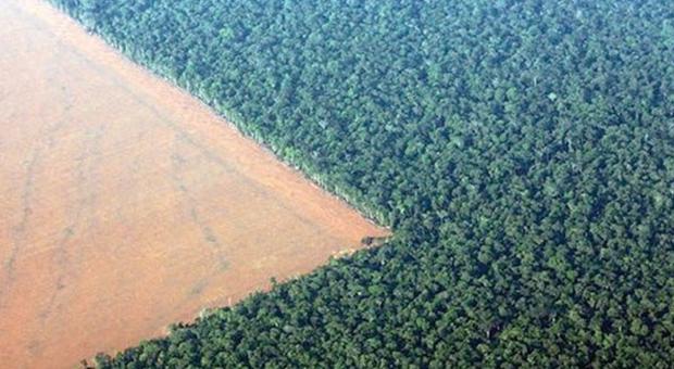 Gıda devi Amazon ormanlarını yok ediyor!