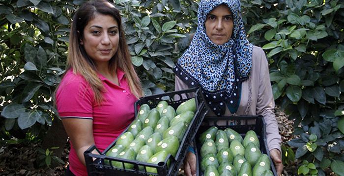 Avokadoda 15 milyon adet üretim hedefi