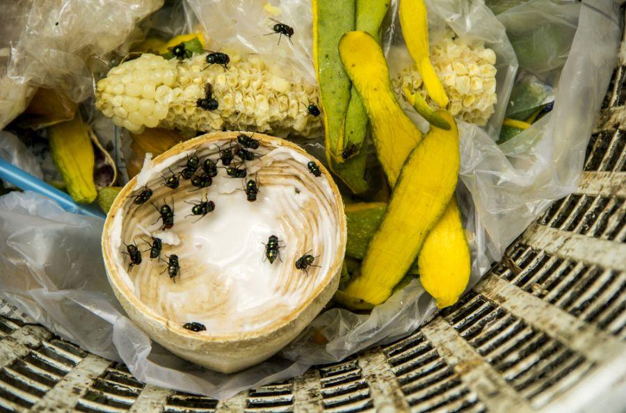 Üzerine sinek konan yemek yenebilir mi?
